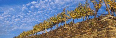 Im Restaurant Donauwirt gibt es Wein von Winzern aus der Wachau