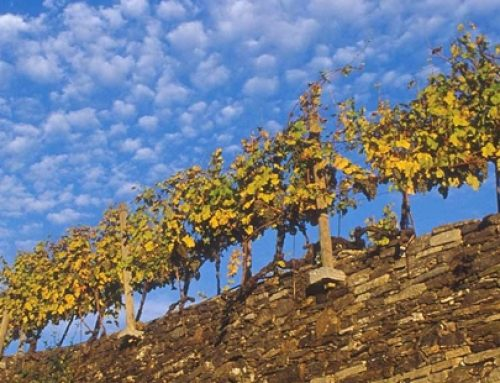 Herbstferien in der Wachau