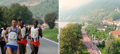 Läufer beim Wachaumarathon