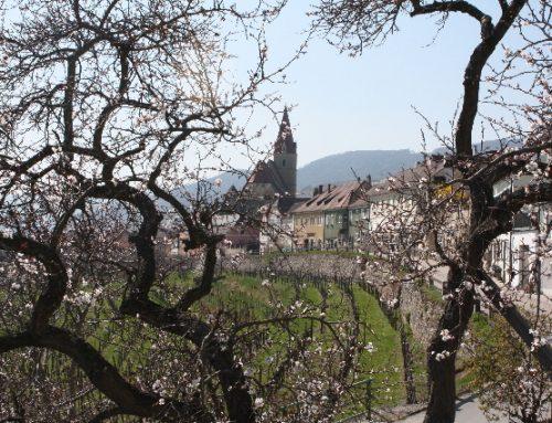 Die Wachau kennenlernen…