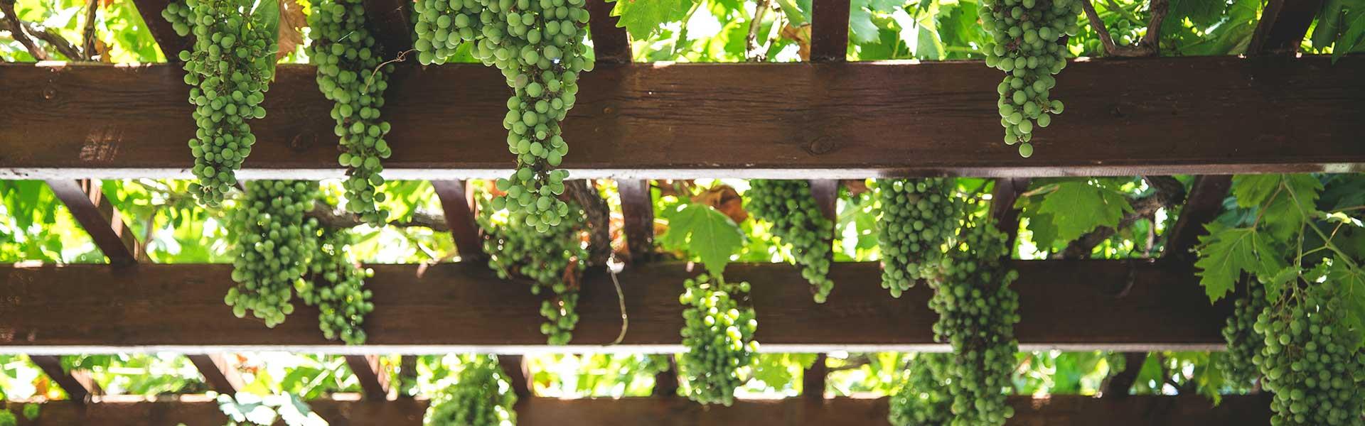 Donauwirt Slide Wein